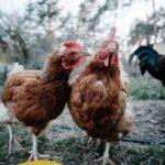 Минсельхоз прокомментировал данные о росте цен на яйца и птицу