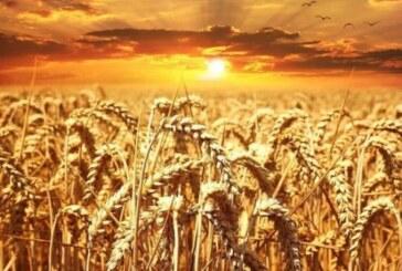 «Русская аграрная компания» займется инновационными направлениями