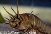 Палеонтологи восстановили облик гигантского хищного червя
