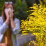 Вдыхание пыльцы связано с обострением боли внизу живота